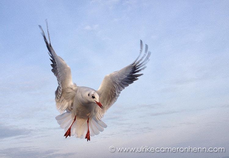 seagull (1 von 1)